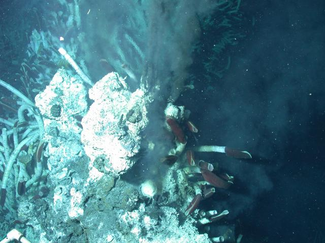 Hydrothermal fluids emanating from vent (2004)
