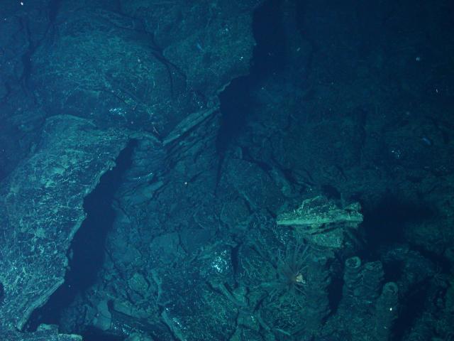 Bathtub ring lava formation at EPR (2004)