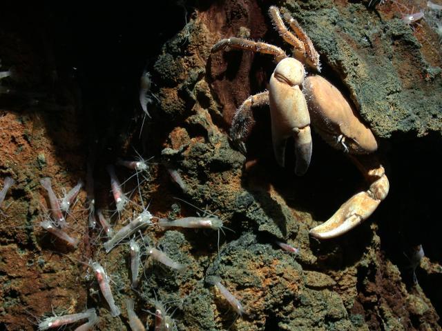 Crab at Kilo Moana (2005)