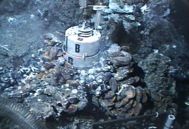 Mussel pot sampling device (2006)