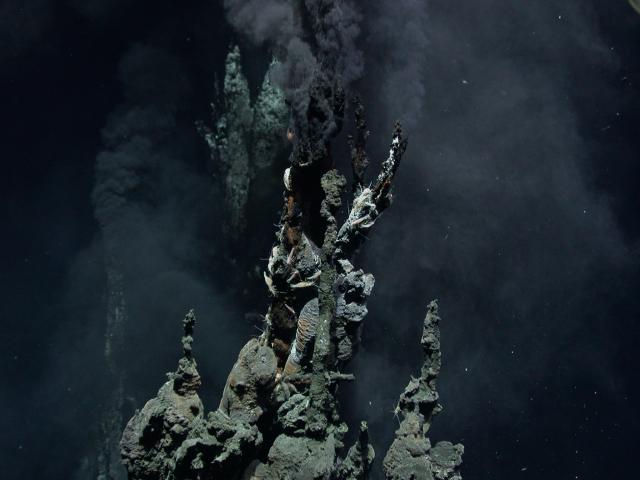 Hydrothermal chimney at Mariner (2006)