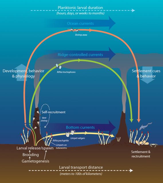 Dispersal among hydrothermal vent communities (2012)