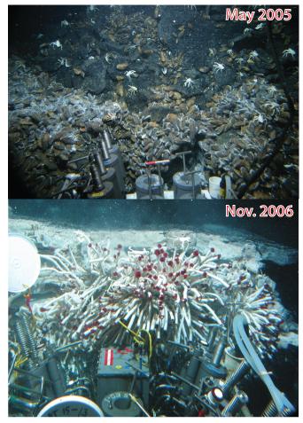 Pre- and post- eruption animal communities EPR (2012)